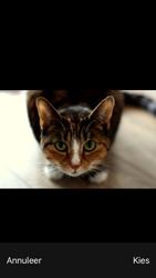Apple iPhone SE - iOS 13 - MMS - afbeeldingen verzenden - Stap 13
