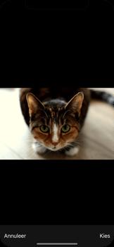 Apple iPhone X - MMS - Afbeeldingen verzenden - Stap 13