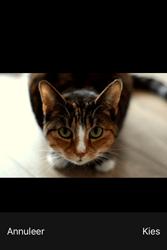 Apple iPhone 4S iOS 9 - E-mail - hoe te versturen - Stap 13