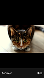 Apple iPhone SE - iOS 12 - MMS - afbeeldingen verzenden - Stap 11