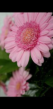 Samsung Galaxy J6 Plus - Photos, vidéos, musique - Prendre une photo - Étape 17