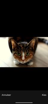 Apple iPhone X - iOS 12 - MMS - afbeeldingen verzenden - Stap 11