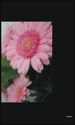 Nokia Lumia 800 - Photos, vidéos, musique - Prendre une photo - Étape 11